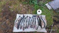 отчет о рыбалке на лоухском озере