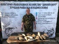 дикий карп рыболовное хозяйство